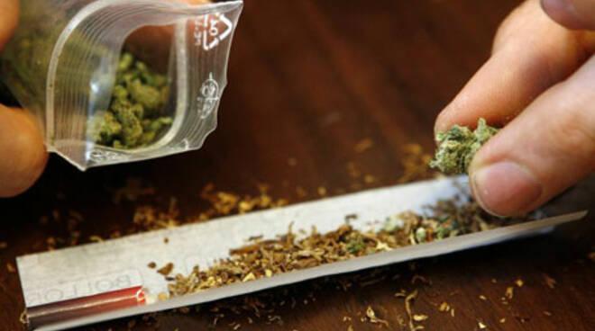 marijuana_canna