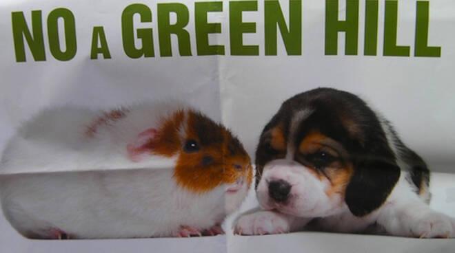 Green-Hill_Manifestazione