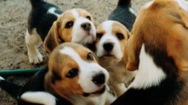 GreenHill-cuccioli-cani