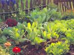 orto fiori