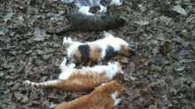 gatti uccisi-2