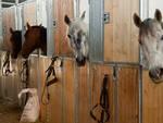 scuderia cavalli