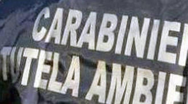noe carabinieri slide