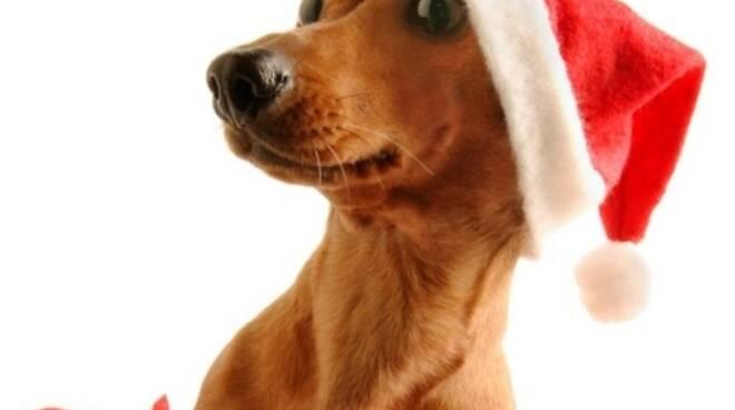 bassotto-natalizio