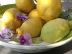 giallo limone prima foto per home page 5