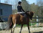 cavallo_amazzone