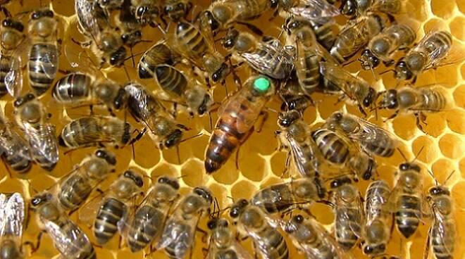 api_apicoltura1