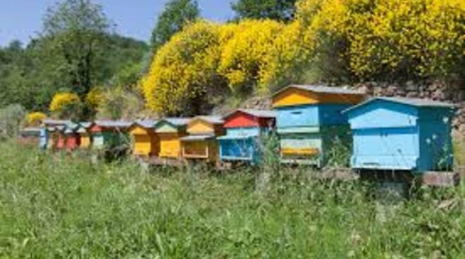 api_apicoltura3