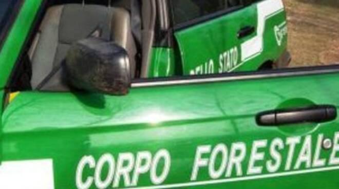 vobarno-forestali-cantieri-abusivi