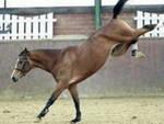 travagliato-caduto-cavallo