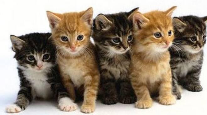montichiari-gatti-abbandonati-scatola