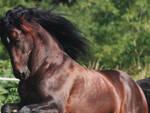 caduta-cavallo-vaghezza