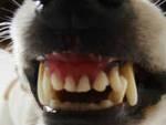 chiari-cani-scorribande