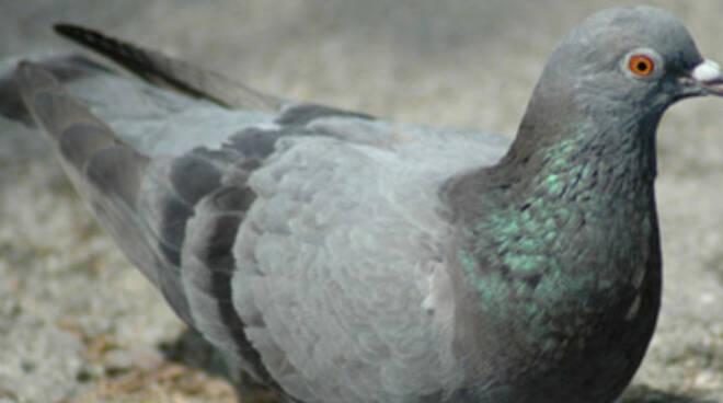 desenzano-piccioni-tar-dissuasori