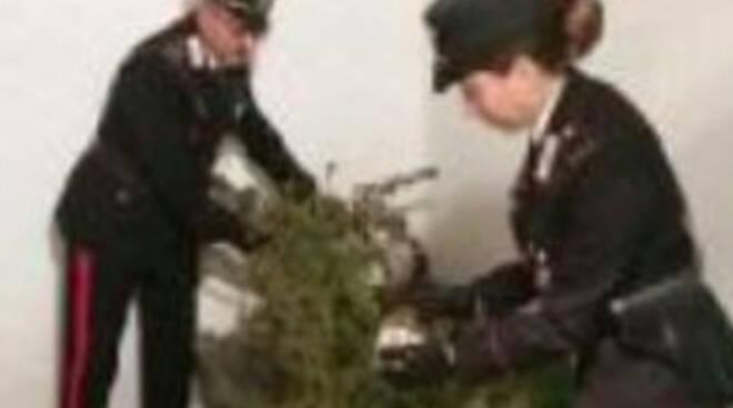 quinzano-piante-marijuana