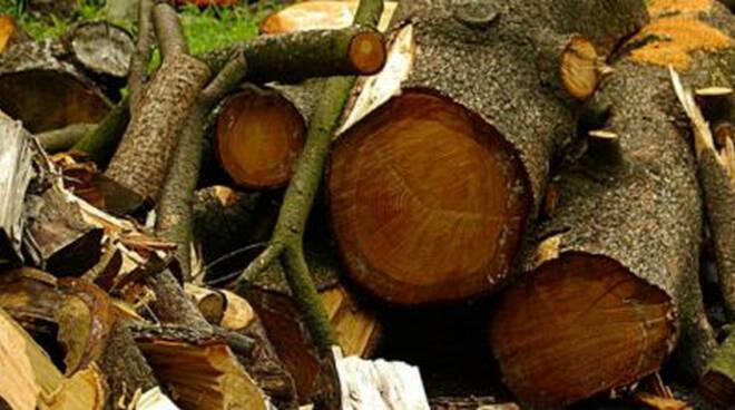 taglio-legna-imprenditore-ferito-pisogne