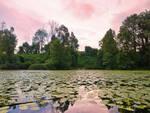 boscaioli-denunciati-parco-oglio