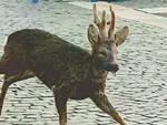 capriolo-salò-lungolago