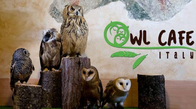Owl-Cafè-gufi-chiuso-palazzolo