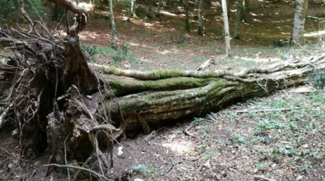 taglio-albero-anziano-travolto-vione