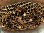 alfianello-caduta-balcone-vespe