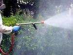 Zanzare-chiari-disinfestazione
