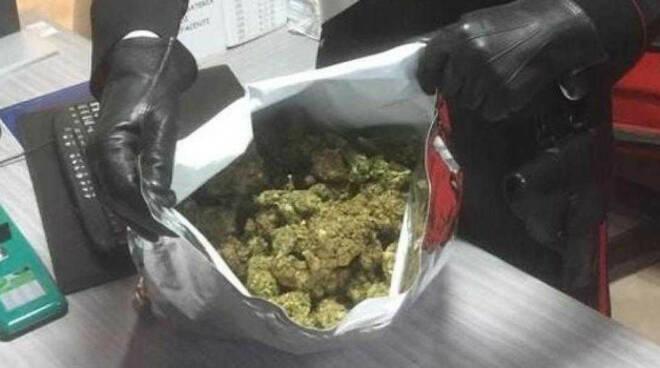 arresto-bergamo-albanese-marijuana