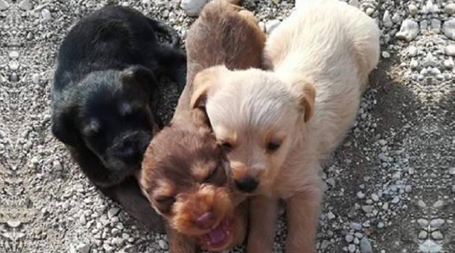 Cani-abbandonati-pendolina