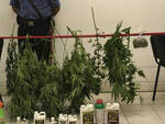 manerbio-arresto-coltiva-cannabis