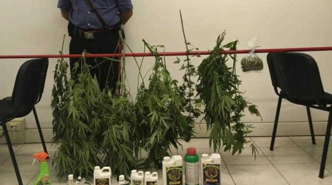 manerbio-arresto-coltiva-cannabis
