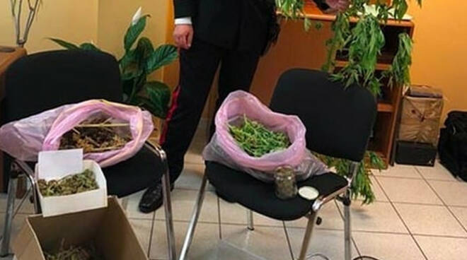 Sabbio-Chiese-piante-canapa-marijuana