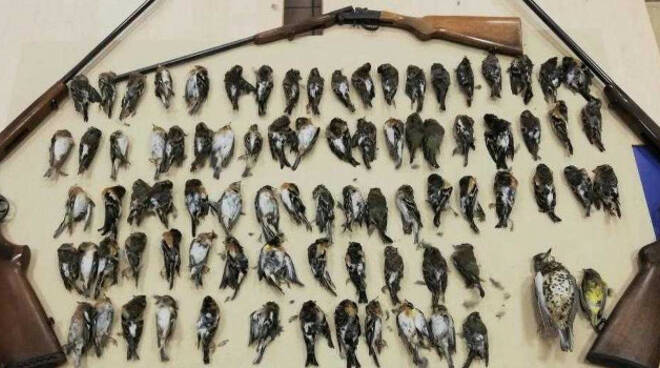 caccia-illegale-denunce