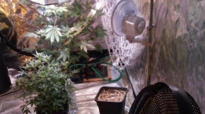 brescia-marijuana-garage-arresto