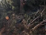 Tignale-rogo-pineta-piromane