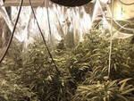 coltiva-cannabis-montichiari-arresto