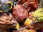 isorella-frutta-marcia-truffa