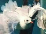 Gabbiano-liberato-palo-sirmione