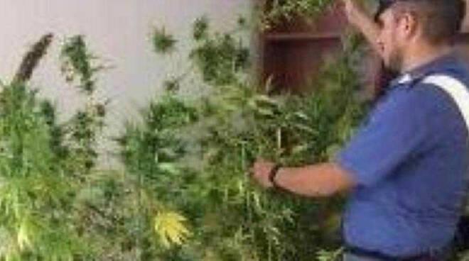 san-gervasio-piante-cannabis-casa