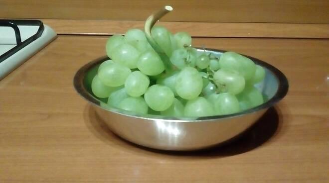 uva-sandra