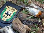 caccia-uccelli-protetti-capannista-denuncia