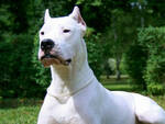 maltratta-cani-condannato