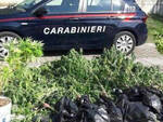 rovato-coltiva-marijuana-giardino