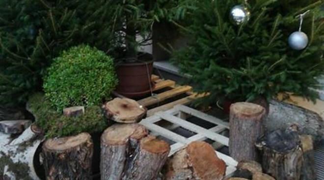 erbusco blitz alberi luci natale negozio