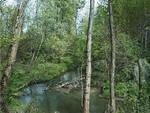 Borgo San Giacomo taglio abusivo alberi parco Savarona
