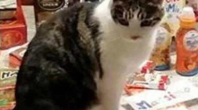 gatta muore colpi carabina capodanno