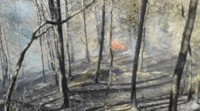 Edolo brucia sterpaglie e manda in fumo un ettaro di boschi