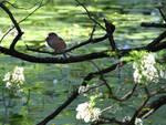 Brescia dal 12 maggio riaprono altri parchi e giardini in città