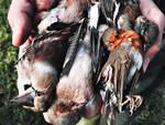uccellagione in Lombardia