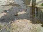 Acquafredda camion perde carico di fanghi miasmi nella zona