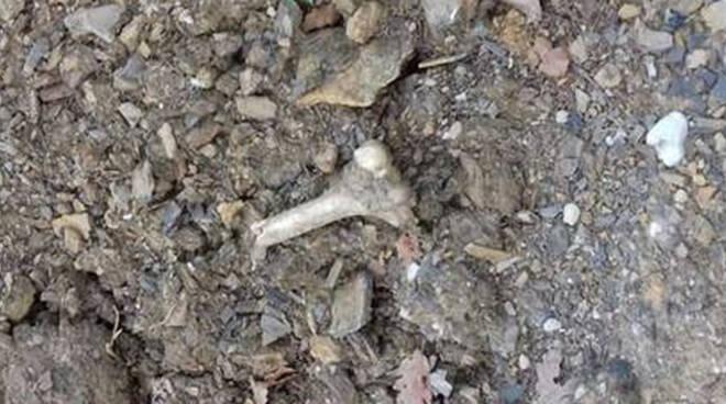Carpenedolo nuovi spazi per inumazioni Nel cimitero resti umani